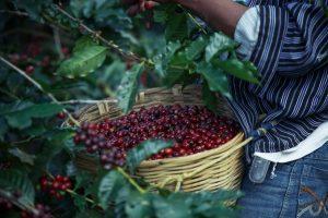 Negara tujuan ekspor kopi